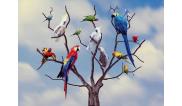 Pappagallo, parrocchetto o calopsitta? Quale uccellino è più adatto a me?